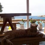 Restaurant du camping de Mykonos